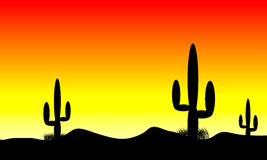 Desert sunset. Sunset in desert with cactus plants Royalty Free Stock Photography