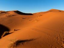 Desert at sunset. Sunlight highlighting the dunes in the Sahara Royalty Free Stock Image