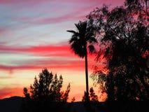 Desert sunset Royalty Free Stock Photos