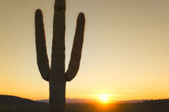 Desert sunset Stock Photography
