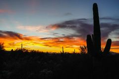 Desert sunset with cacti silhouetted royalty free stock photo