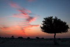 Desert Sunset. Evening view into the desert in Rajasthan Royalty Free Stock Photo