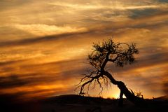Desert sunset, Kalahari desert Stock Image