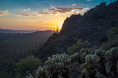 Desert Sunset. Sunset over Saguaro National Park, Arizona USA royalty free stock photo