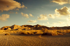 Desert sunset Stock Photos