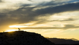 Desert sunset Riders Royalty Free Stock Photography