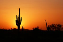 Desert Sunset Silhouette. Lonely Saguaro cactus standing sentinel against a desert sunset backdrop Royalty Free Stock Photography