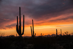 Desert Sunset royalty free stock photo