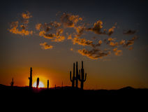 Desert Sunset. The sun sets behind cactus in the Arizona desert stock photos