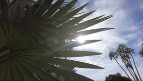 Desert time-lapse: sun shinning through desert plants with palm trees in the background