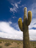 Desert Totem Royalty Free Stock Photography