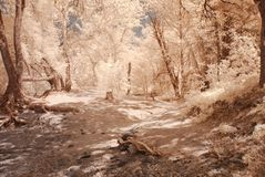 Desert Trail Stock Images