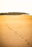 Desert Trail of Hope Forward Stock Photo