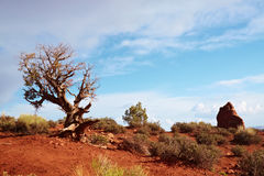 Desert Tree. Arches National Park, Utah, USA Stock Image