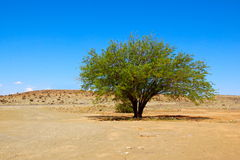 Desert tree Stock Photos