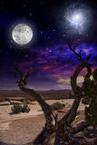 Desert Tree. And Horizon with Full Moon Stock Photos