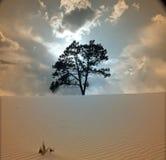 Desert Tree. High Resolution Illustration Desert Tree Stock Image