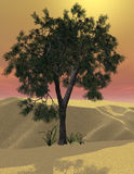 Desert tree. 3d rendered image of a tree in the desert with a glowing sky Royalty Free Stock Photography