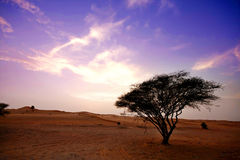 Desert and a Tree royalty free stock photo