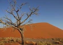 Desert tree Royalty Free Stock Image