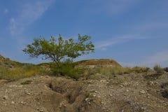 Desert Tree in the Badlands Stock Photos