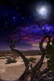 Desert Tree. And Horizon with galaxy  Some elements provided courtesy of NASA Royalty Free Stock Photography
