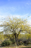 Desert Tree. An image of a desert landscape shot in Carefree, AZ – March 2014 Royalty Free Stock Photos