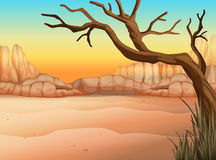 A desert with a tree without leaves Royalty Free Stock Photography
