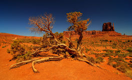 Desert Tree in Monument Valley Stock Photography