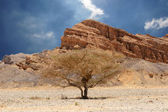 Desert tree and mountains Stock Photos