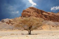 Desert tree and mountains Stock Photos