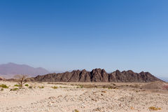 Desert tree and mountains. Royalty Free Stock Photo