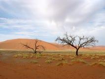Desert. Tree and sand in Namibian desert, Africa Royalty Free Stock Photo