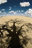 Desert tree shadow. Tree shadow in African desert stock image