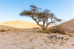 Desert tree trail marking sign camping site. Desert tree bush trail marking sign camping site travel destination tourism Israel Shvil Middle East royalty free stock image