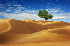 Desert and the trees Royalty Free Stock Photo