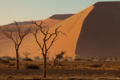 Desert trees stock photography