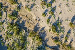 Desert Trees from Above. View of desert sand, brush, and trees from above Royalty Free Stock Images