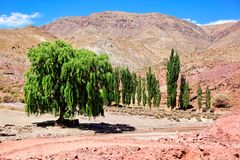 Desert trees, Bolivia Stock Images