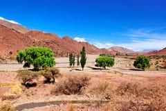 Desert trees, Bolivia. Group of trees in desert, Bolivia, South America Stock Images
