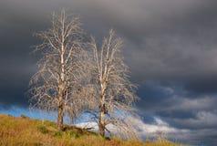Desert Trees (Landscape) Stock Photography