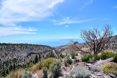 Desert valley landscape. Desert valley at foot of the volcano Teide on Tenerife Canary Islands Spain Royalty Free Stock Photography