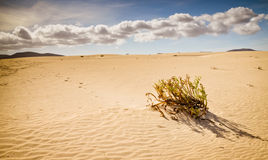 Desert vegetation Royalty Free Stock Images