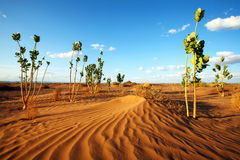 Desert vegetation Stock Image