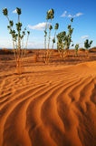 Desert vegetation Royalty Free Stock Photos