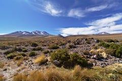 Desert vegetation Royalty Free Stock Photography