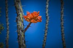 Desert vegetation flower Royalty Free Stock Photo