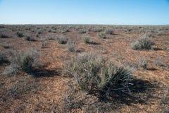 Desert Vegetation Stock Image