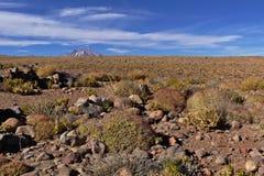 Desert vegetation. Desert landscape with plenty of vegetation, rocks and a massive volcano in the background Stock Images