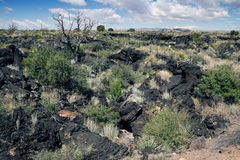 Desert vegetation on lava.  Valley of  Fires Recreation Area,  C Stock Photos